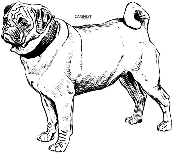 coloring pages dog # 22