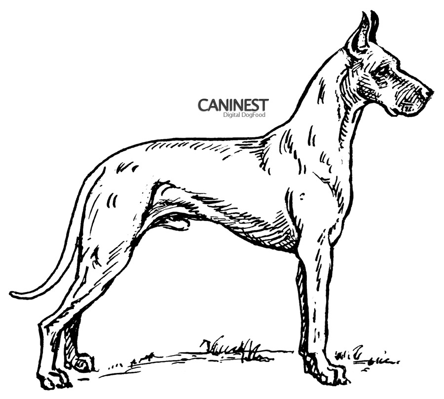 dog diagram outline large uml sequence asynchronous message breed coloring pages 2