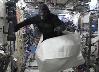 gorilla-iss_3581538b