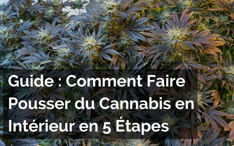 Comment Faire Pousser du Cannabis en Intérieur en 5 Étapes