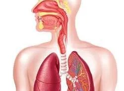 The Effects of Marijuana Smoking on the Lungs