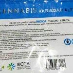Este miércoles comienza la venta de marihuana en farmacias, a un precio de 187 pesos los cinco gramos