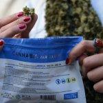 Demoras en controles de calidad y distribución dejan a consumidores sin marihuana legal