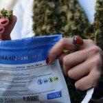 Venden cannabis en efectivo por sugerencia del Banco Central