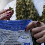 Dos farmacias se suman a la venta de cannabis en Montevideo