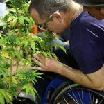Los próximos 8, 9 y 10 de diciembre se llevará a cabo la Expocannabis