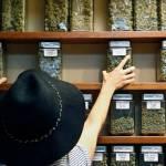 Gobierno federal estudia ofensiva contra la marihuana recreativa