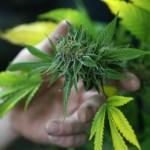 México.- México legalizará a partir de 2018 fármacos y demás productos derivados de la marihuana