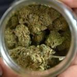 Infracciones de tránsito y sobredosis en niños: retos del cannabis legal en EEUU