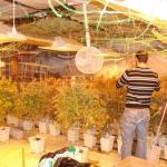 La marihuana divide a los jueces vizcaínos: condenan a un club de cannabis días después de absolver a otro