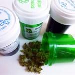 Ciudadanos pregunta por escrito a Carcedo sobre qué opina del uso de cannabis medicinal