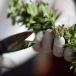 El Parlamento de Israel aprueba permitir la exportación de cannabis con fines medicinales