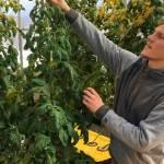 Universidades ofrecen carreras para estudiar la marihuana