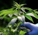 Ecuador debate aborto y uso medicinal del cannabis