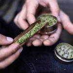Gobierno autorizó a tres nuevas empresas para la producción de cannabis psicoactivo