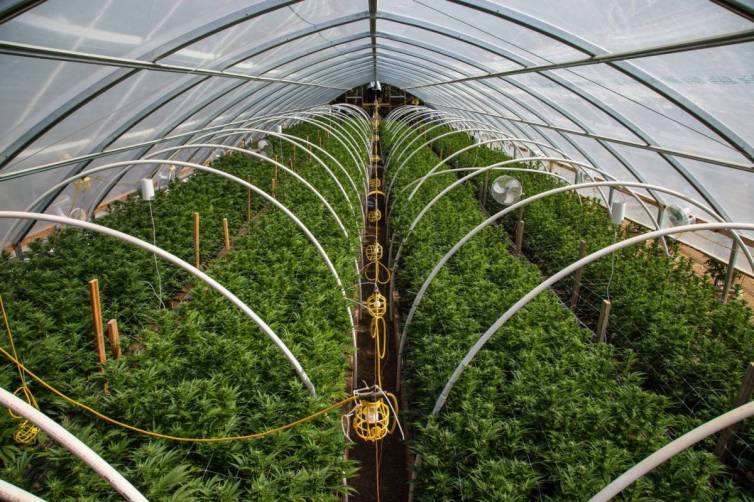 ACMPR License to Grow Medical Marijuana Canada