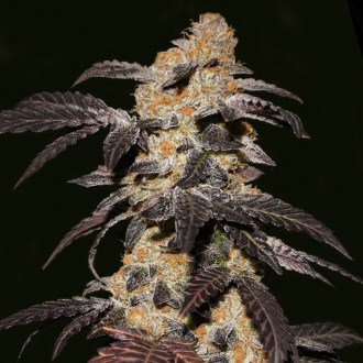 Strawberry Glue by T.H. Seeds