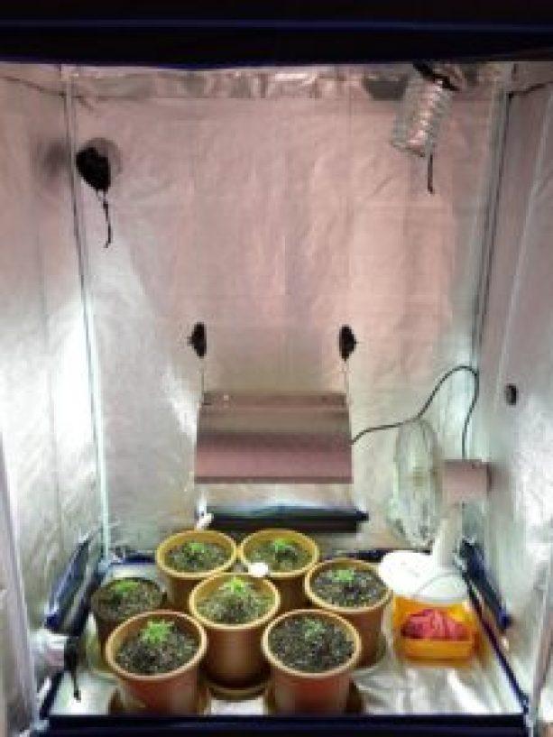 small indoor grow