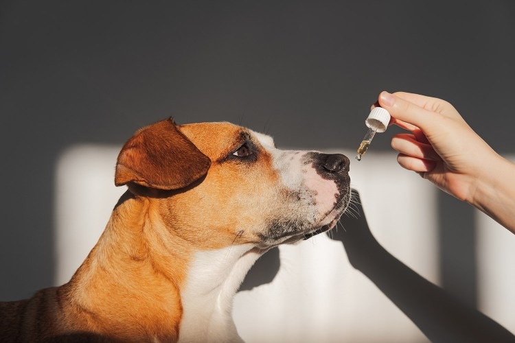 CBD Products For Your Pets