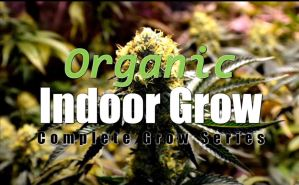 Start To Finish – Indoor Organic Cannabis Grow Tutorial