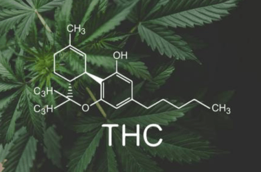THE EUPHORIC EFFECTS OF THC