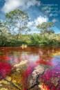 Caño Cristales y sus espectaculares aguas cristalinas / Fotografía por Mario Carvajal