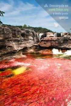 Caño Cristales ¡Impresionante río! / Fotografía por Mario Carvajal