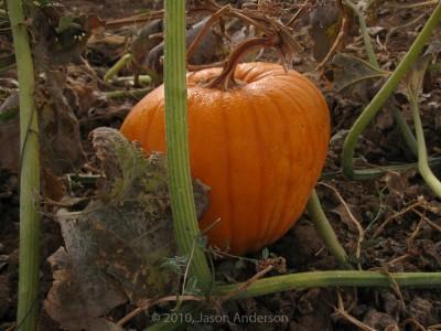 Pumpkin Trip 3