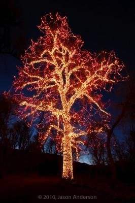 Christmas Lights at Chatfield 3