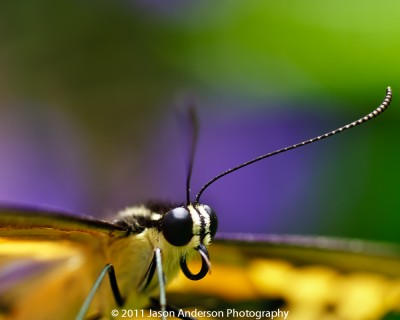 Antennae
