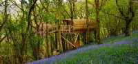 Living Room Treehouses | Powys | Canopy & Stars