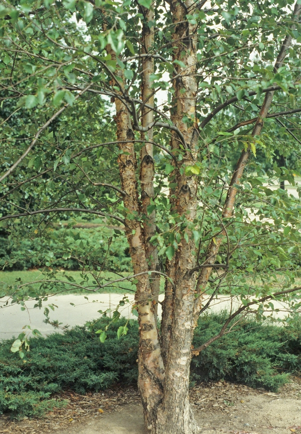 all season trees river