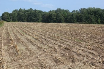 Drought and tar spot impacted field
