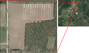 Overview of soybean plots
