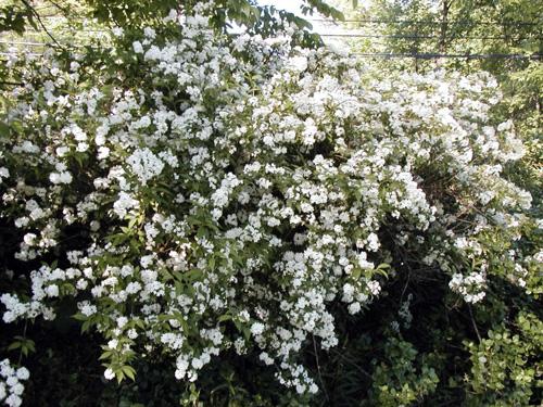native plants michigan landscapes