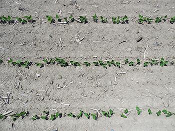160,000 seeds per acre