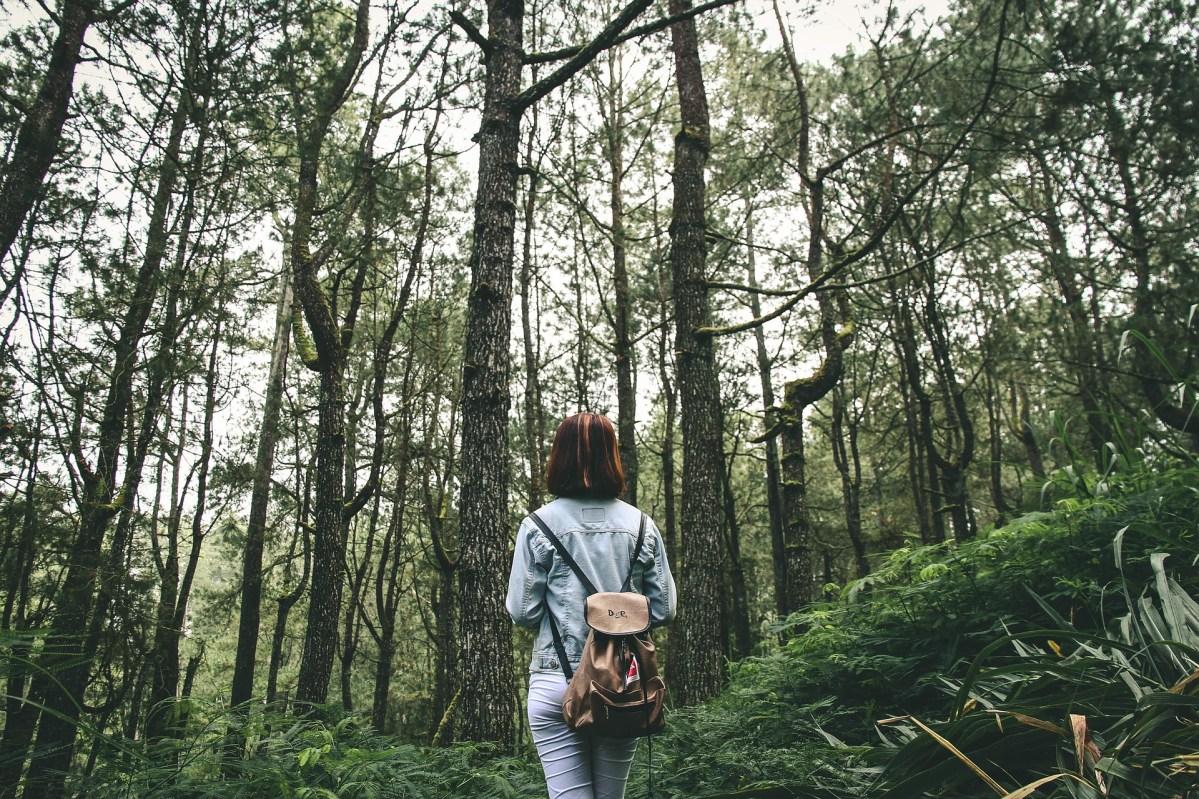 El bosque de las heridas uterinas