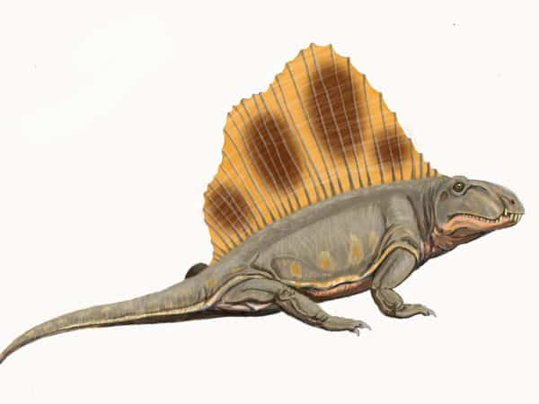 PEIs celebrated dinosaur is actually a mammal say researchers  Cantech Letter