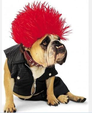 costume carnevale cane 2