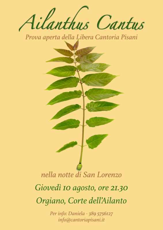 Ailanthus cantus 10-08-2017