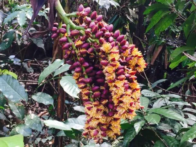 Jungle fruit in Phong Nha-Ke Bang National Park, Vietnam