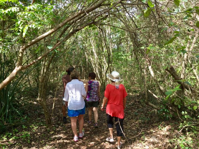 Jungle Walk at Choo Ha Cenote on Mayan Experience Tour with Layla Guesthouse