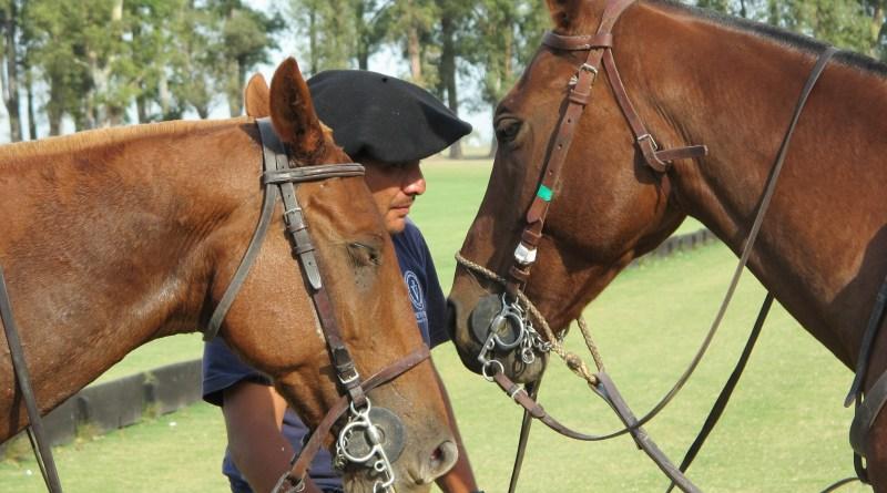 caballos-petisero