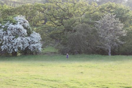 Photo of a child playing in the glamping meadow