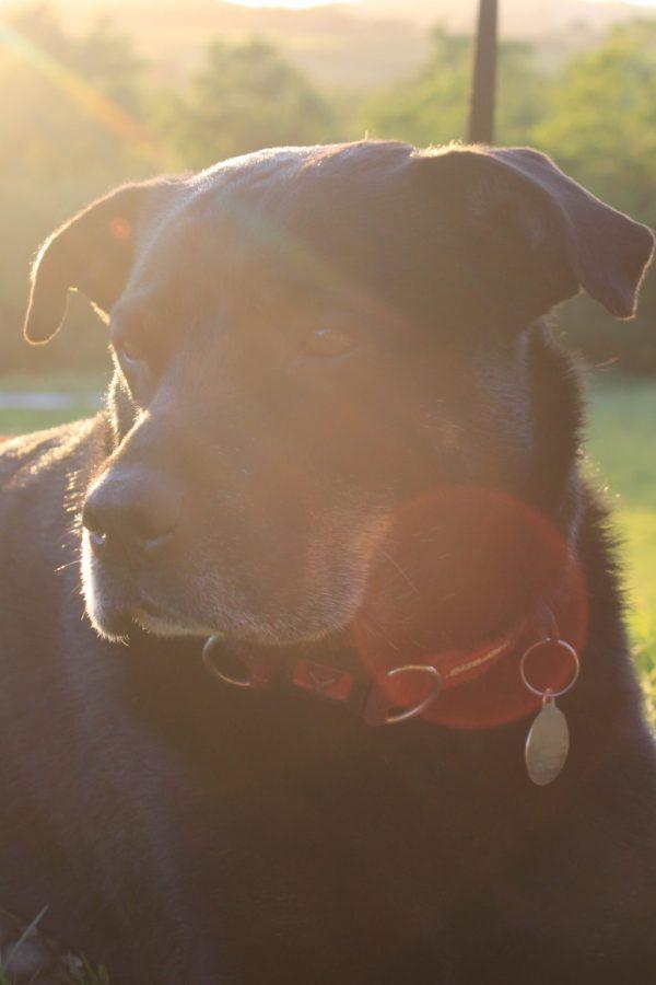 An image of Blossom the farm dog enjoying the sunshine