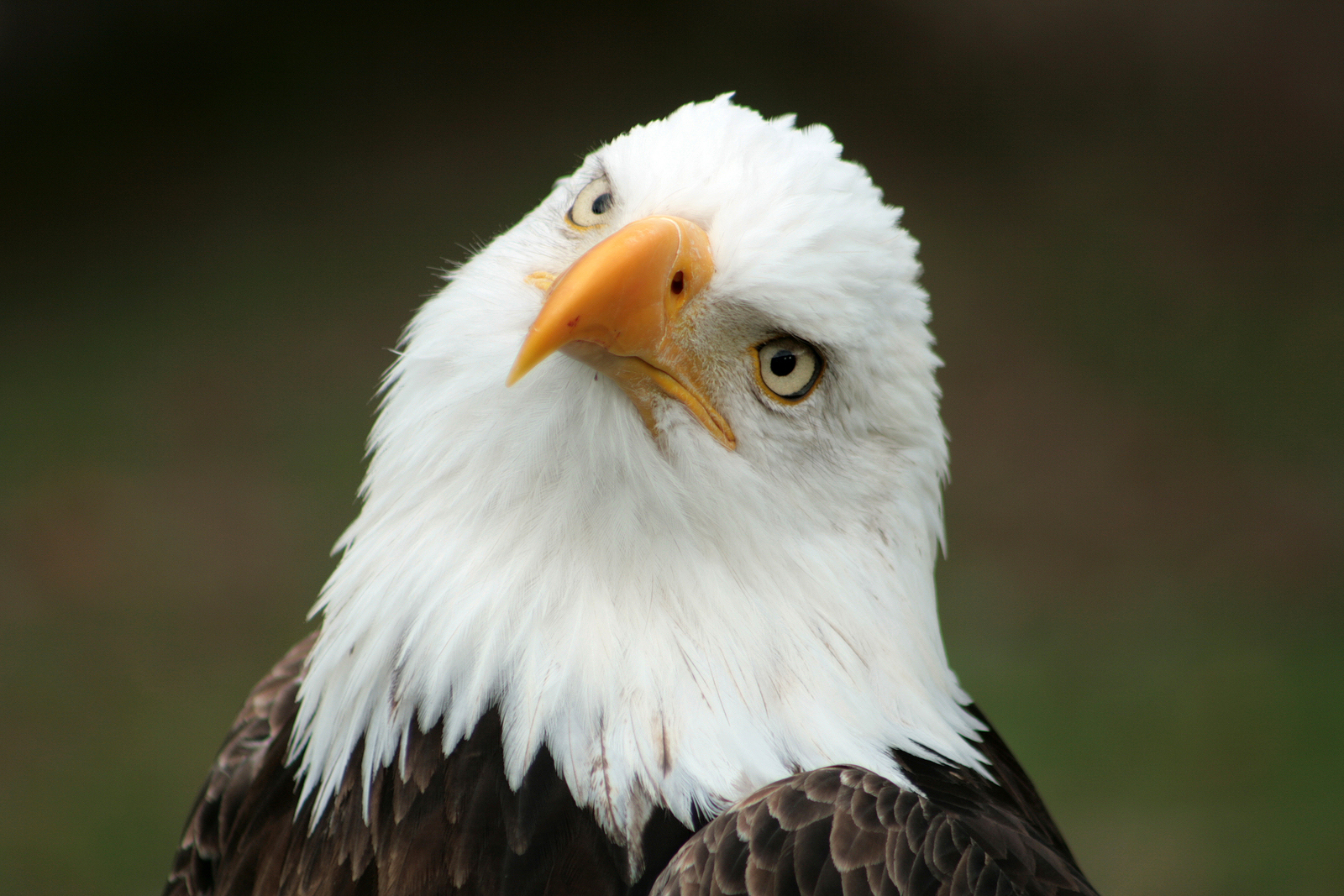 Changes Proposed For Endangered Species Act