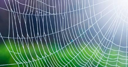 Il rischio di impresa e la tela di ragno della 231/2001