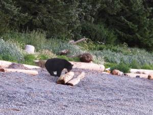 Bear Promenade