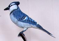 Blue Jay - $450