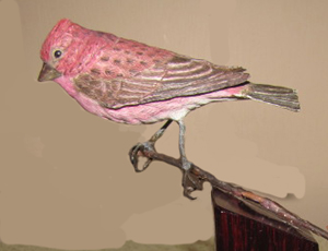 Purple Finch  - $375